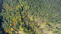 Lesů máme akorát, ale chybí pestrost, říká krajinný ekolog