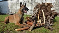 Cvičí psy na to, aby hledali pašeráky v Africe. Chci, aby moje dcera viděla zvířata ve volné přírodě, říká