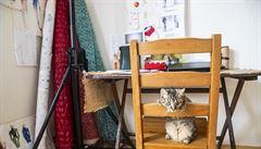 Přichází nová móda: psi a kočky v práci. Zlepšují prý sociální vztahy