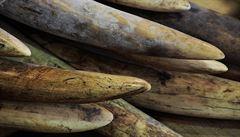 Thajská policie zadržela údajného krále asijských pašeráků, živily ho nosorožčí rohy a slonovina