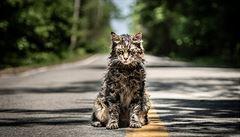 RECENZE: Přejetého kocoura neoživovat. Řbitov zvířátek je strašidelná historka s otřepaným ponaučením