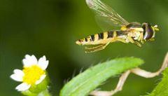 Každý rok ubývá 2,5 procenta hmyzu. Jestli to tak půjde dál, za sto let zmizí úplně
