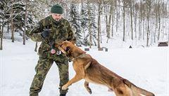 Čelí raketám v Afghánistánu, dohlíželi na Obamu. Armádní psi stojí i sto tisíc, tvrdí jejich 'šéf'