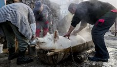 Zemědělce v Polsku sežrali vepři, které choval. Sousedé našli jen kosti