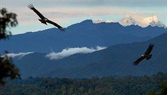 Krále kolumbijských And kondora ohrožují hlavně lidé
