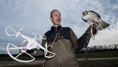 Dravčí škola létání. Sokolníci v Česku používají k výuce drony ověšené kuřaty