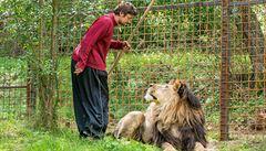 'Se lvem chodil na procházky jako se psy.' Podle starosty chovatel k tragédii směřoval