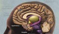 Zeptali jsme se vědců: Kde a jak se v mozku ukládají vědomosti a vzpomínky?