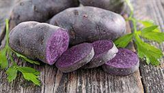 Zdánlivě obyčejná brambora. Gastronadšenci se vrhli i na pěstování historických odrůd