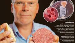 'Umělé' maso proti oteplení. Vědci chtějí snižovat produkci skleníkových plynů