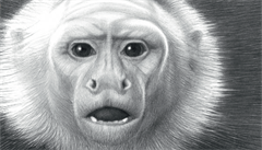Lidé se od zvířat musí naučit, jak být přirození, říká ilustrátor