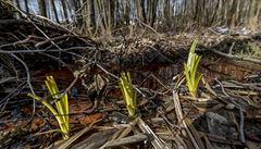 Česká krajina dál trpí. Déšť vypijí rostliny, na podzemí vláha nezbývá