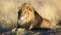 Pytlák chtěl zabít vzácného nosorožce. Udupal ho slon a poté sežrali lvi