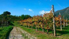 První víno pěstoval člověk na nehostinném jihovýchodě Turecka