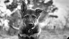 Policie přišla o populární 'snídaňové štěně'. Udusilo se kouskem jídla