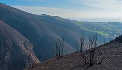 Změny klimatu brzdí obnovu lesů v Kalifornii. Ze Spojených států se brzy může stát poušť