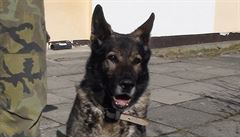 Armáda hledá nový domov pro psí hrdiny: stojí kolem tří set korun. Podívejte se, které nabízí