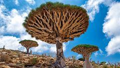 Vědci z Brna pomáhají chránit vzácné dřeviny na ostrově Sokotra