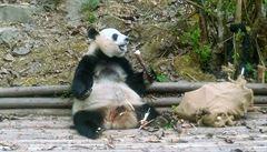 ČÍNSKÝ ŠOK: Testy, pandí zábava a pomlázka na čínský způsob