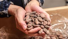 Jak se pozná kvalitní kakaový bob? To je jako s vínem, říkají tvůrci čokolády, která sbírá mezinárodní ceny