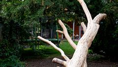 Zahrada pro zábavu i odpočinek. Děti zpátky na strom a brouzdaliště s kamínky