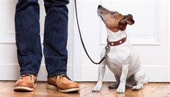 Čtyřnohá terapie zabírá. Se psem budete mít více pohybu i psychické pohody
