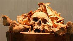Rusové uklízí ves od 100 let starých lidských kostí. Pocházejí z masových hrobů