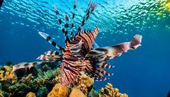 Vědci u mořských ryb zjistili neobvyklý způsob barevného vidění