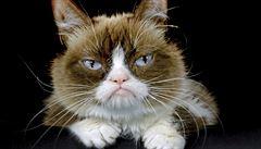 Uhynula nejslavnější kočka světa. 'Mrzutá' Grumpy Cat majitelům vydělala miliardy