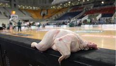 Oškubané kuře na lavičce místo hráčů. Slavnému Olympiakosu hrozí za bojkot sestup