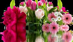 Darujte květiny, které dlouho vydrží