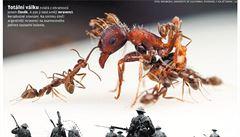 Lidé jsou podobní hmyzu. Totální válku umí rozpoutat pouze člověk a mravenci