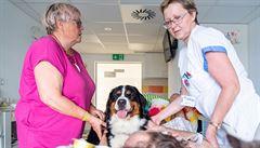 Dlouhodobě nemocným pacientům v Olomouci zlepšuje náladu přítulný kocour a fenka