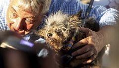 Seznamte se, nejošklivější pes světa. Vítěz vynikl 'mimořádně přihlouplým výrazem'