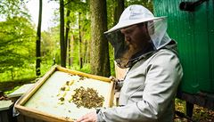 Starat se o včely není jednoduché, ale jsou pro nás životně důležité, říká výrobce oceněné české medoviny