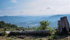 Kam na dovolenou? Slovensko nabízí i zubry v pralese
