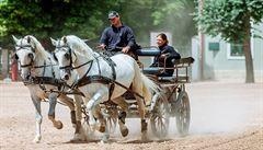 V Kladrubech se chystají na nápor turistů. Návštěvníci koně krmí, což jim škodí, varuje zooložka
