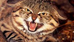 Vědci v Tibetu objevili dosud nejstarší fosilii kočkovité šelmy