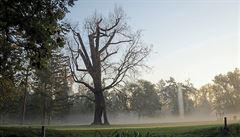 Pád jednoho z nejstarších stromů v pražské Stromovce? Výsledek lidské hlouposti