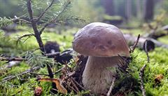 Vědci objevili geny, které umožňují rostlinám symbiózu s houbami