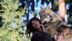 Vlci k nám patří, byli tu dříve než my. Měli bychom je respektovat, říká 'vlčí žena'