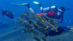 Moluky, ostrovy provoněné muškátovým oříškem a hřebíčkem, jsou klenotem potápěčů