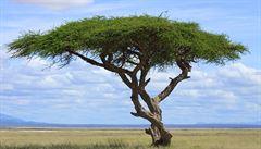 Etiopané za den vysadili 353 milionů stromů, je to světový rekord