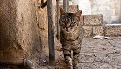 V Jeruzalémě se záhadně ztrácejí kočky. Lidi šokovala fotografie rozřezaného zvířecího těla