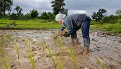 Japonský fastfood bude pěstovat rýži u Fukušimy