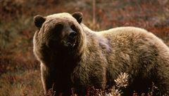 Fotopast u Mistřic na Uherskohradišťsku zachytila medvěda. Lidé mají být opatrní, šelma dorazila asi od Luhačovic