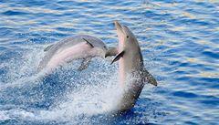 Středeční LN: Drezura delfínů v Česku? Úřady jsou proti