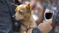 V Chile hlídají kvalitu vína psi
