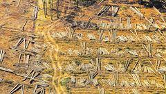 OBRAZEM: Fotoreportér LN vzlétl nad středočeskou krajinu a zachytil kůrovcovou zkázu