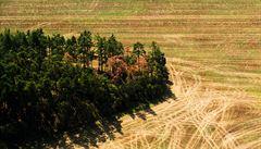 Zachování zbytků lesa dle vědců pomáhá biodiverzitě i zemědělcům
